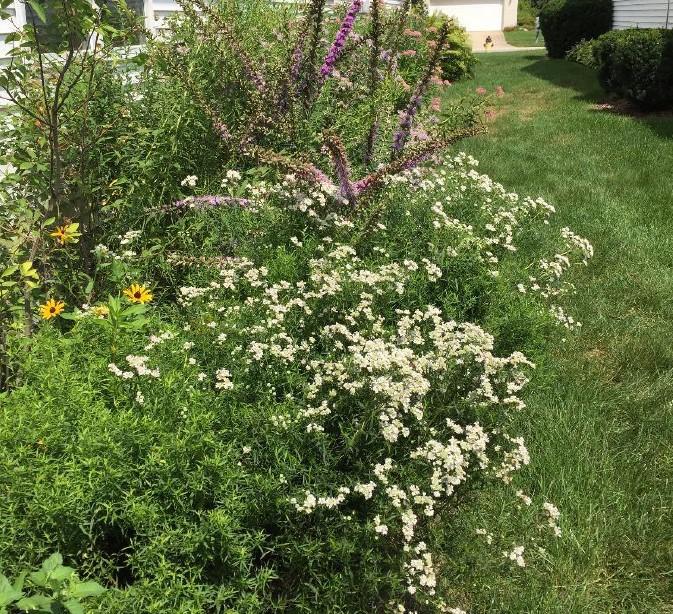 becky croke garden v1