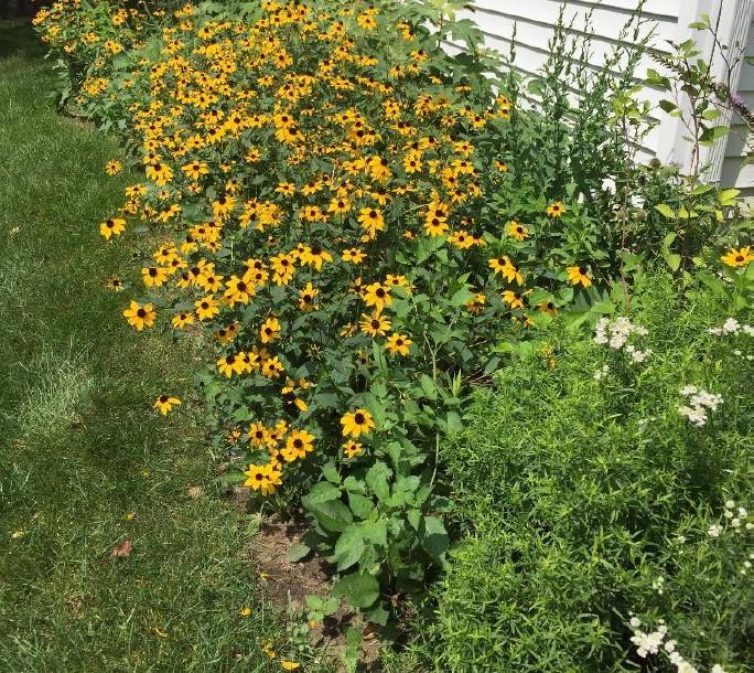 becky croke garden v2