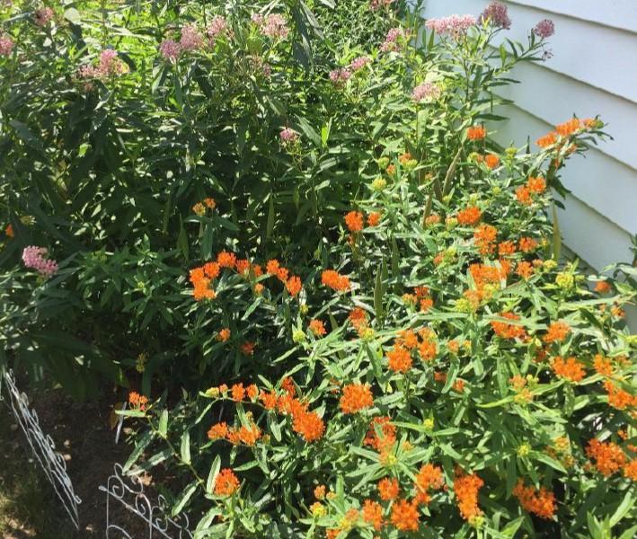 becky croke garden v3