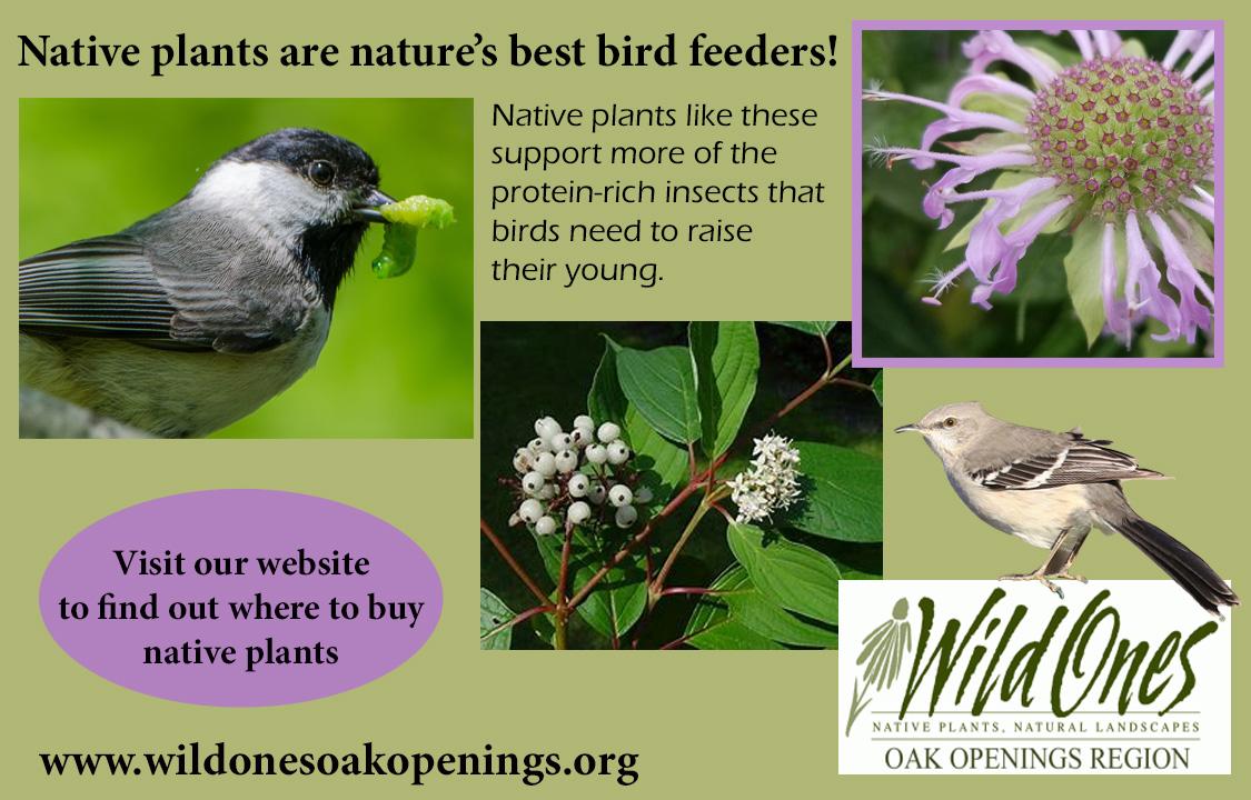 WO native plants are bird feeders
