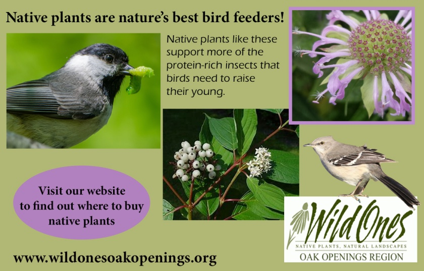 WO native plants are bird feeders
