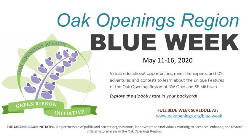 Blue Week flyer for virtual events 2020