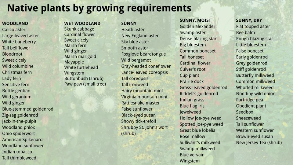 Native Plants by Growing Requirements - by Kate M-W