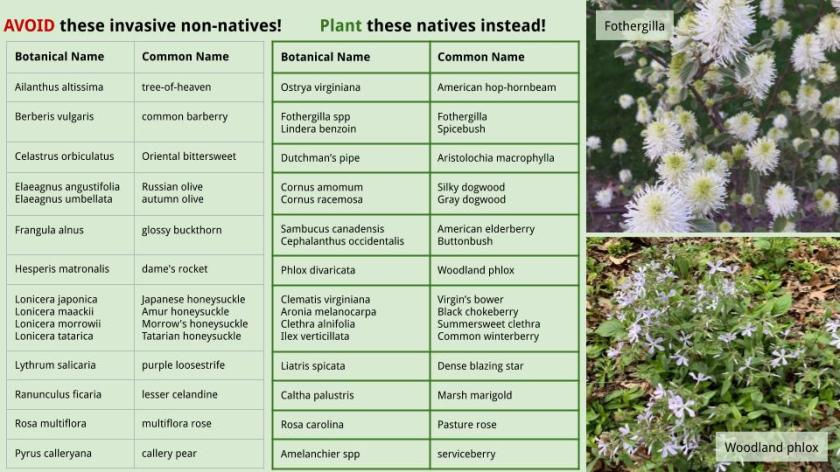 Native substitutes for invasives - list by Kate M-W