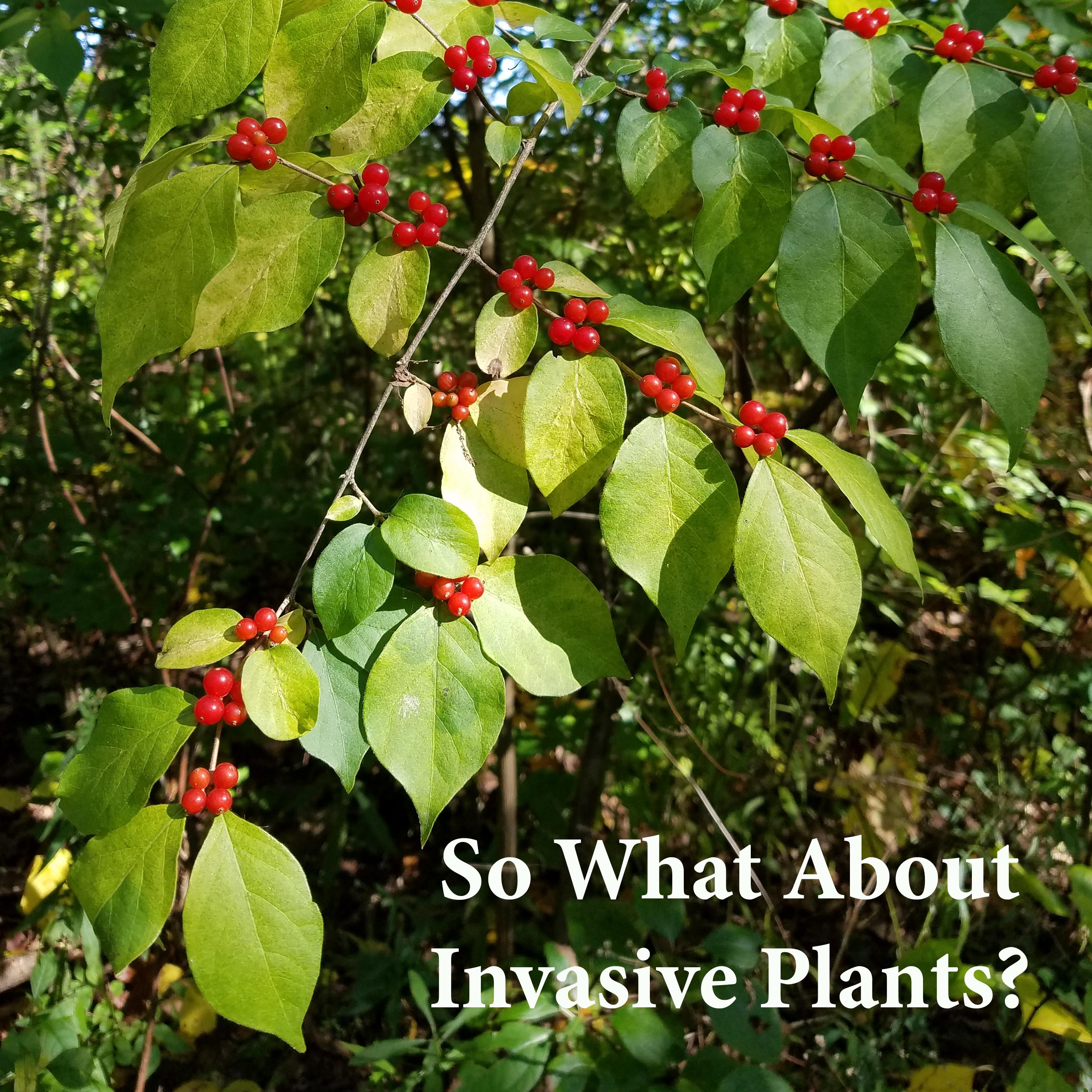 NAV-GRAPH About Invasive Plants