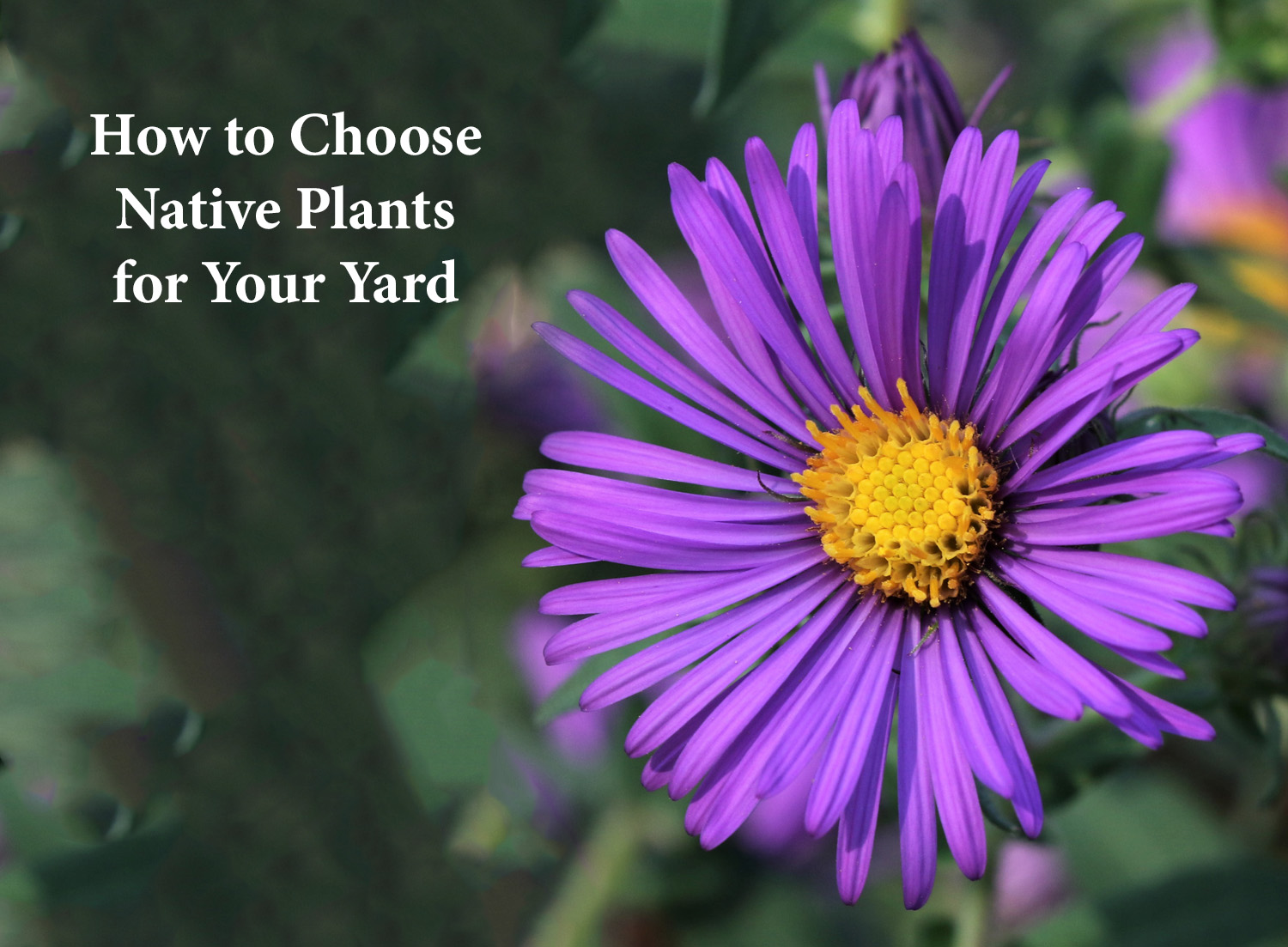 How to Choose Native Plants for Your Yard
