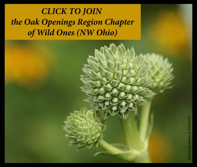 Wild Ones Join Here - click image with rattlesnake master